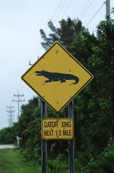 Gator Crossing sign - Yes these signs are for real, Not a joke!