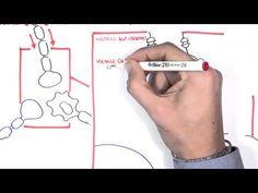Pharmacology - Antiepileptics Video focuses on the mechanism of...