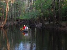 South Carolina's typically humid subtropical climate creates mild winters, beckoning visitors for a pleasant tour of the lush Congaree National Park. http://sunnyscope.com/enjoy-lush-landscape-congaree-national-park/