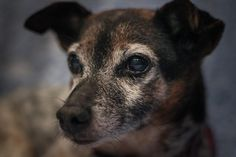 Spud -- my first explore!  Enjoy my other cute doggy pics, too….