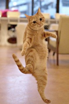 """Adorable cute cats' fancy dance.........REMINDS ME OF JACKIE GLEESON'S --""""AND AWAY WE GO!!!"""".........ccp"""
