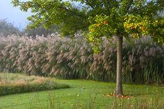 The orchard meadow Perennial Grasses, Perennials, Narcisse, Winter Garden, Hedges, Outer Space, Garden Projects, Garden Inspiration, Beautiful Gardens
