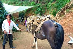 Coffee farmer Ladislao with one of the two #horses that TerraMica gifted to him. A farmer with horses is so much more productive. Check out our blog on this www.terramica.org/blog #agriculture #coffee