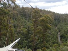 this was the view of the final leg at Hollybank treetops, over the creek. Was 50M high and got up to speeds of 70km ph. (26th Dec) SO MUCH FUN