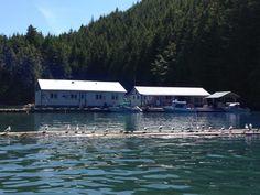 Bones Bay Lodge, BC fishing