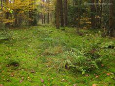 Die Raumfee: Herbstimpression . Herbstinspiration