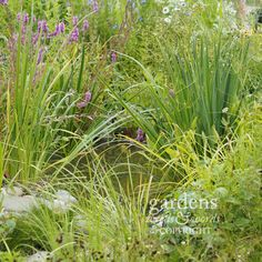 Detail from the Working Wetlands garden by Jeni Cairns. #garden #gardens #gardening #plants #flowers #RHSHamptonCourt