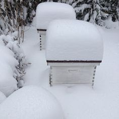 Maintainance After a Snow Storm Beekeeping in Winter: Hive maintenance after a snow storm.Beekeeping in Winter: Hive maintenance after a snow storm. Hives And Honey, Honey Bees, Beekeeping For Beginners, Buzz Bee, Raising Bees, Backyard Beekeeping, Bee Happy, Save The Bees, Hobby Farms