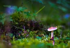 #mushroom #photo #photography #forrest #fairytale #autumn