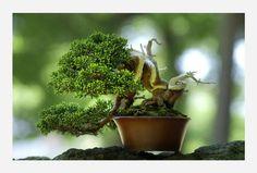 盆栽 画像 - Google 検索