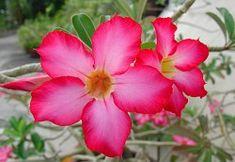 Foto de Thai Jasmine