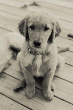 Little puppy.