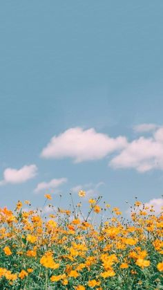 iPhone and Android Wallpapers: Spring Field Wallpaper for iP Field Wallpaper, Spring Wallpaper, Iphone Background Wallpaper, Nature Wallpaper, Aesthetic Pastel Wallpaper, Aesthetic Backgrounds, Aesthetic Wallpapers, Images Esthétiques, Sunflower Wallpaper
