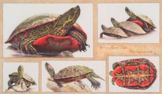 Botanical Illustration: GNSI Annual Members' Show, Boulder 2014 - People's Choice
