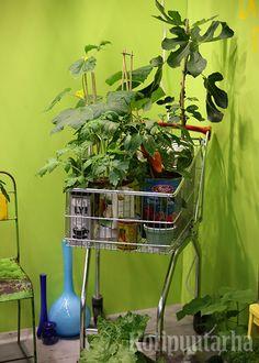 Nordiska Trädgårdar 2016, Tukholma. Indoor, Plants, Furniture, Home Decor, Interior, Decoration Home, Room Decor, Home Furnishings, Plant