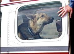 Pilots Take Flight In Order To Help Homeless & Abused Dogs