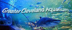 Cleveland Aquarium | newsnet5.com | WEWS-TV NewsChannel5 | Cleveland ...