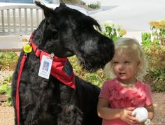 Moose, a giant schnauzer, therapy dog visits patients at Hudson Hospital, including young, Josie Soderbeck. Moose is a regular visitor with owner Jean Lundholm.