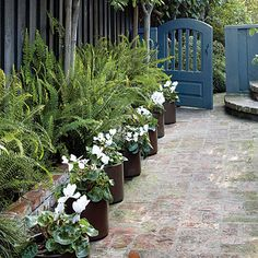 Plant a border in pots - Side Yard Ideas - Sunset