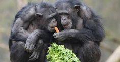 Resultado de imagem para Livros sobre Primatas