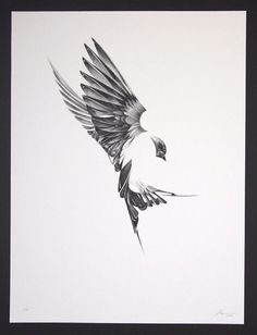 """Here's an absolutely stunning set of art prints from Von. Titled """"Flight"""", and exploring the unique anatomy of birds:"""