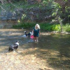 Braeburn Dog Park - Rapid City, South Dakota South Dakota Vacation, Park Rapids, Rapid City, Rv Travel, Dog Park, Four Square, Places To Go, Traveling, Spaces