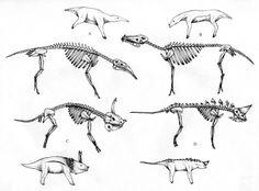 Unguloherp Bones by PousazPower on DeviantArt Creature Drawings, Creature Concept Art, Monster Mash, Skeletons, Bones, Moose Art, Creatures, Deviantart, Animals
