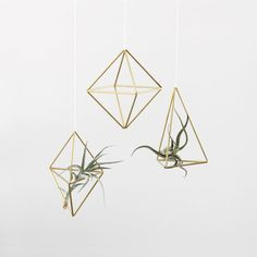 Set of 3 // Brass Himmeli Air Plant Hanger / Hanging door HRUSKAA, $49.00