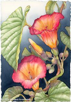 Barbara Groenteman ~ Janine's Hawaiian Bells ~ Watercolor on Paper