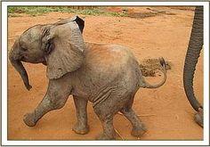 Baby Mwende