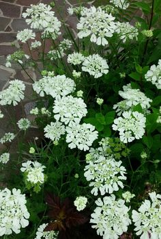 Green Flowers, Dream Garden, Garden Planning, Container Gardening, Garden Plants, New Homes, Herbs, Rose, Lawn And Garden