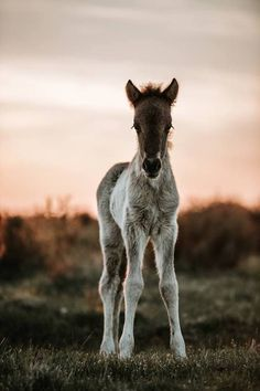 What a beautiful foal! Very nice coat and very young! #Jupinkle