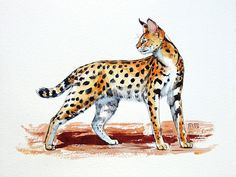 Serval. Original watercolour. Animal portrait. African