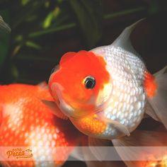 Jorge Martin, Aquariums, Food Branding, Fish Tanks