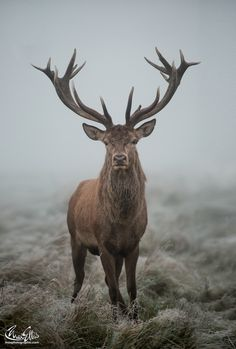 Close Encounters Of The Foggy Kind by Max Ellis on 500px