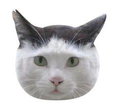 里親さんブログ思い立ったら「地域猫」^ω^ - http://iyaiya.jp/cat/archives/74216
