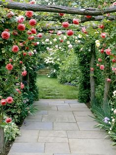 where would I put this wonderful arbor and roses???