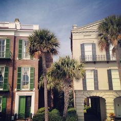 #Charleston palmettos