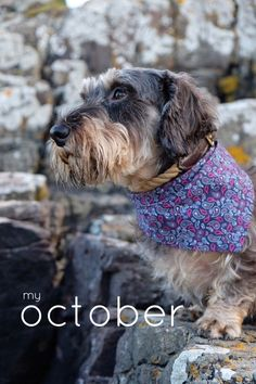 'My October' on @stellerstories 🍂🍁