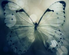 butterfly, nature, and blue kép