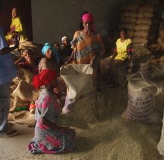 The Ethiopian Yirgacheffee Peaberry coffee is sold through the Yirgacheffe Coffee Farmers Cooperative Union (YCFCU) in Addis Ababa, Ethiopia.