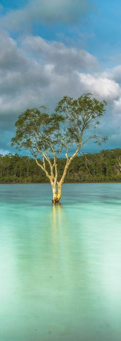 Paradise is just a short ferry ride away... as Brendon from ESB Photography found out  #fraserbarges #fraserisland #queensland #australia www.fraserislandferry.com.au