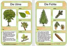 Hello everyone, this afternoon I finished the last tree posters. I still have some deciduous trees, as well as the 4 important … School Hacks, School Fun, Primary School, Back To School, Primary Education, Science Education, Nutrition Education, Montessori Materials, Diy Christmas Cards