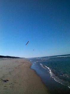 birds flying along Canaveral National Seashore/Playalinda Beach in Titusville FL.
