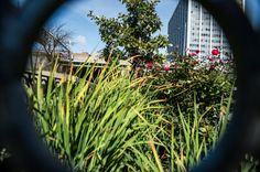 New York Plants Curbside Gardens to Soak Up Storm-Water Runoff - NYTimes.com