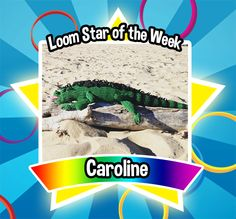 Congratulations to Caroline! You are our Loom Star of the Week. Your iguana is simply wonderful. Great design and execution makes this not so 'lil guy very lively and impressive. We love him! Great work!  Loom on!  Facts about Pickle, the iguana  Time spent to make: 8 weeks  Bands use: over 38,000 bands  Number of Rainbow Looms to make: 7 looms (minimum)   Size: 4.5 feet and around 5 pounds #FBLoomStaroftheWeek #FBLoomStar