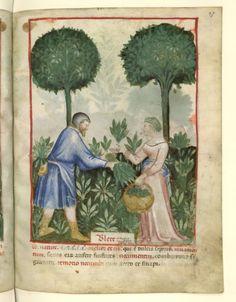 Nouvelle acquisition latine 1673, fol. 27, Marchand de bettes. Tacuinum sanitatis, Milano or Pavie (Italy), 1390-1400.