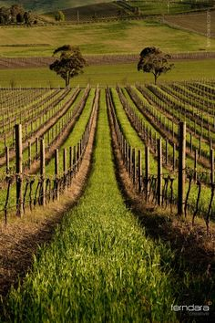 De Bortoli Vineyard, Yarra Valley, Victoria, Australia. Photo: ~darukster on deviantART