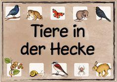 """Ideenreise: Themenplakat """"Tiere in der Hecke"""""""