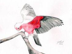 Image result for australian bird painting